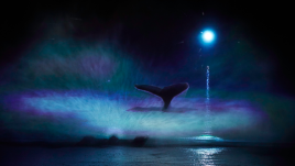 A dark silhouette of a whale tail within a white and light blue splash of water on the River. In the backdrop is a bright white spot of light in the dark sky