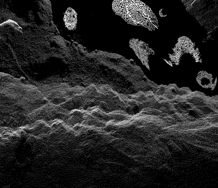 black and white image of fossils